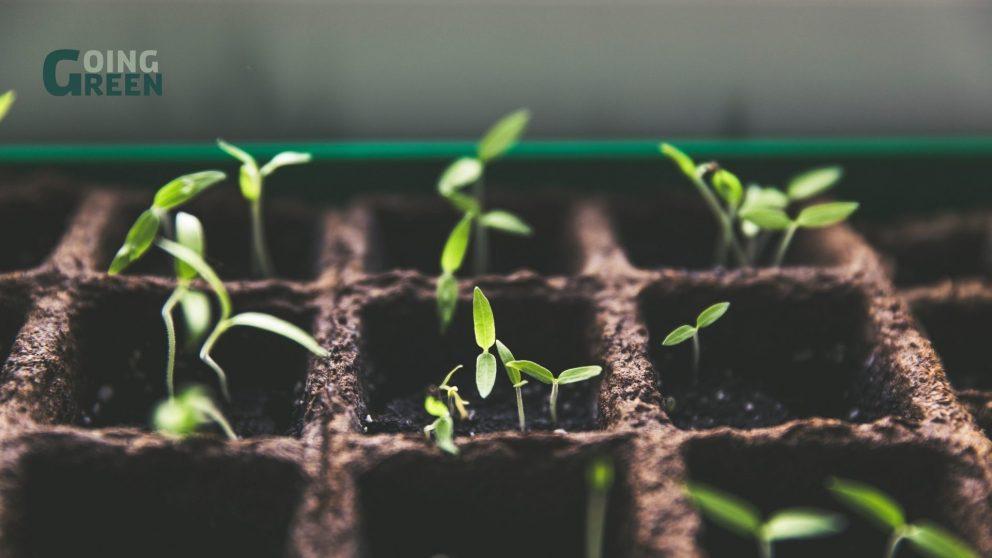 grøn boks med planter der vokser